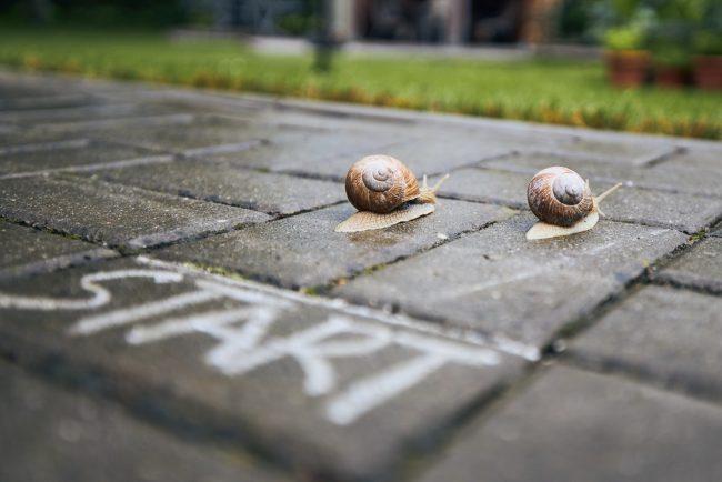Racing snails behind start line
